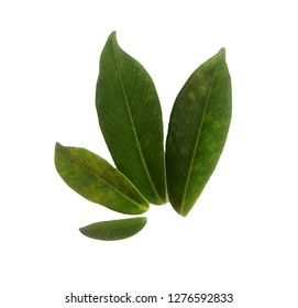 Perennial leaves in groups