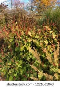 Perennials plants in garden design
