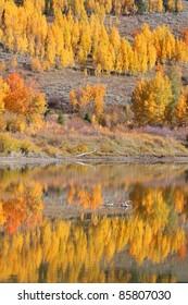 Perfect Autumn reflection