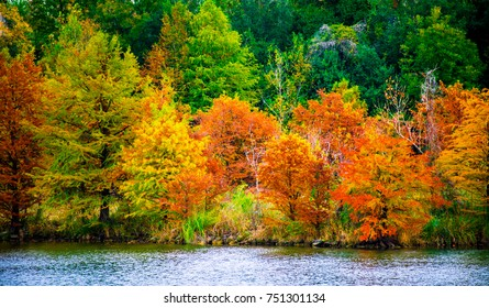Perfect Autumn at the Water's Edge Fall Colors at Red Bud Island in Austin, Texas Central Texas Colorful Leaves changing
