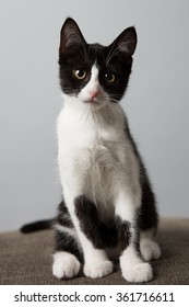 The perfect black and white tuxedo cat you might ever see.
