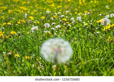 Perfect blowball background