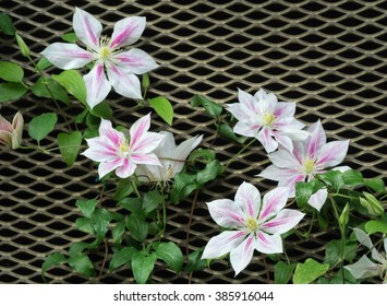 Perfect climbing flowers on creative background