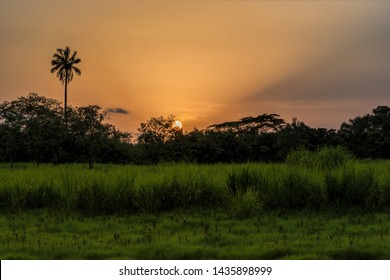 Perfect colorful African sunset with backlit silhouette of palm trees. Guinea, West Africa.