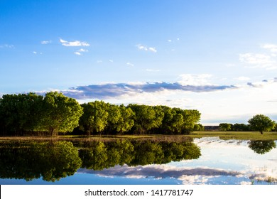Perfect evening reflections of the marsh and trees at Bosque del Apache National Wildlife Refuge