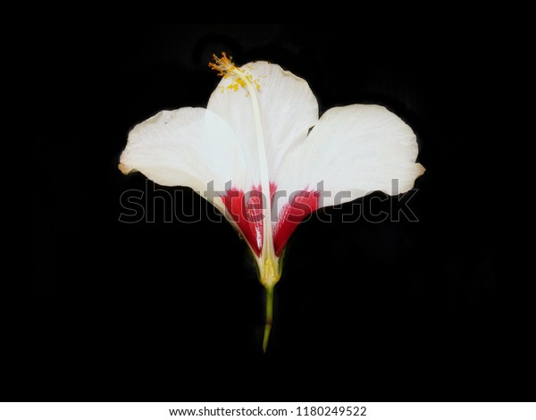 Perfect Flower Which Contain Both Male Stock Photo Edit Now 1180249522