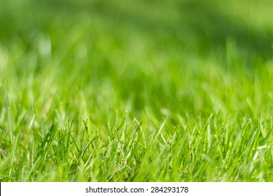 Perfect green background by the fresh grass