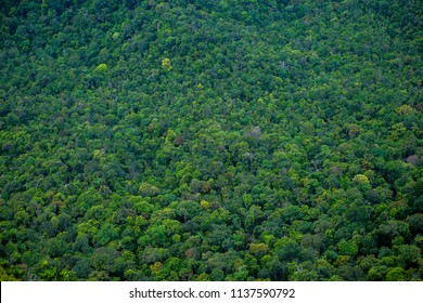 Perfect green  and dense tropical rainforest. Arial view background on a sunny day.