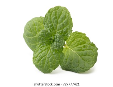 Perfect Green Mint Leaf Isolated on White Background.