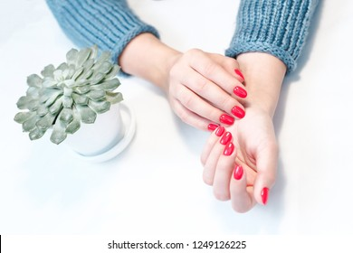 Perfect groomed woman's hands with red nail varnish. Beautiful flowerpot succulent on table.