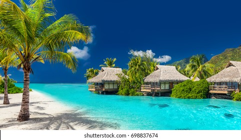 Perfect holiday location on a tropical island with palm trees and amazing vibrant beach