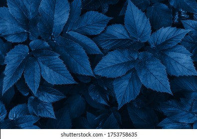 Perfect natural fresh grass pattern background. Dark blue moody backdrop for your design. Copy space.