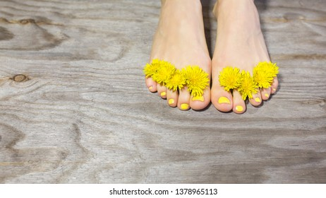 Perfect pedicure and spring flower over wooden background
