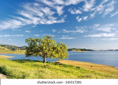 The perfect picnic spot under a tree and broad blue clouded sky, on the shore of a lake.
