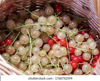 Perfect, ripe red and white currants (ribes rubrum) in the woven basket. Taste of summer