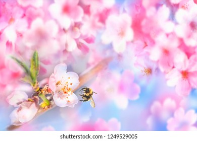 Perfect Sakura Cherry Blossoms in Japan. Spring background
