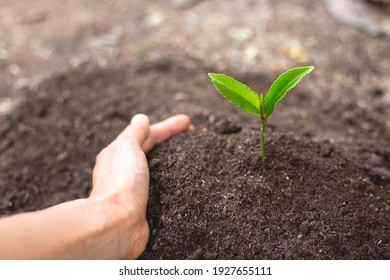 The perfect soil has a hand protection concept in preparation for agricultural cultivation. For gardening, organic farming, soil quality and World Soil Day.