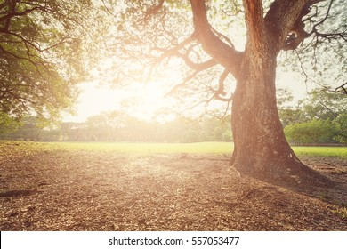 perfect tree and sunset in park
