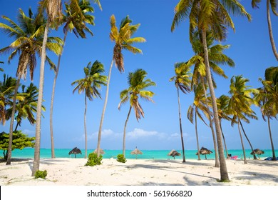 Perfect white sand beach with palm trees, Zanzibar, Tanzania