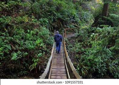 The perfect woodland forest adjacent to the Oregon coast - man walking on bridge