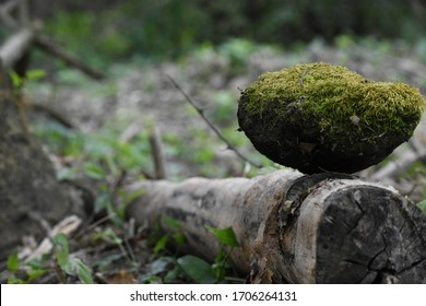 perfectly balanced stone covered with moss on a dry branch