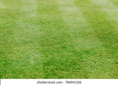 Perfectly cut grass in garden. Greenery full frame background. Low angle perspective