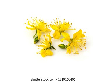 Perforate St John's-Wort Flowers Isolated on White Background. small yellow flowers