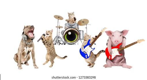 Performance of animals musicians