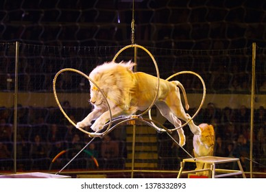 performance of a trainer of lions in a circus