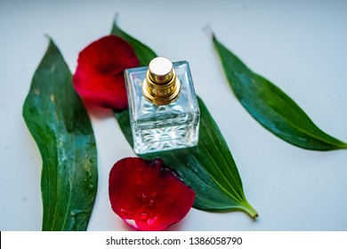 Perfume bottle surrounded by flower petals. Eau de parfum. Eau de toilette with flowers on white background.