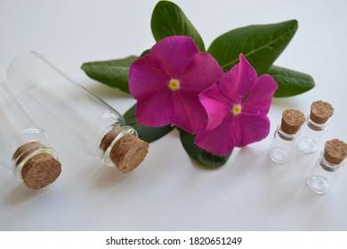 Perfume bottles and flowers on white background. Mockup branding cosmetics. Perfumery.