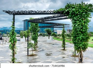 Pergola in the park of Batumi with green woody vines, Georgia