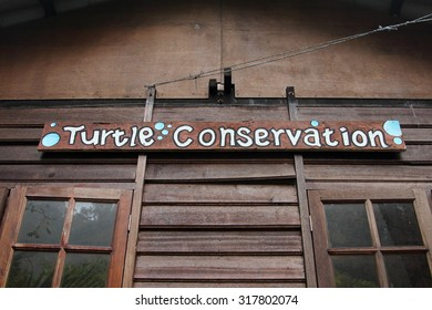 PERHENTIAN ISLAND, Malaysia, September 18, 2015: A green turtle conservation program at Perhentian Island, Malaysia. Green turtle is considered an endangered species.