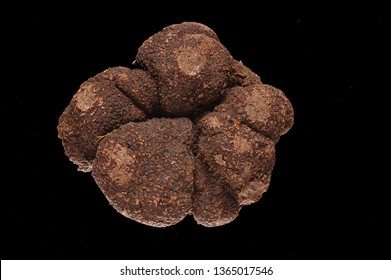 Perigord truffle on black background