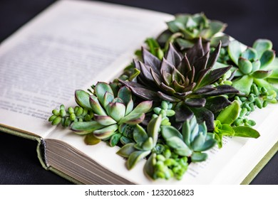 Perle Von Nurnberg plants on a book page as a gift composition