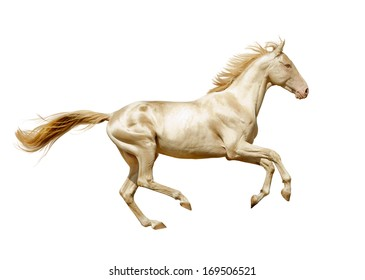 perlino alhal-teke horse isolated on white
