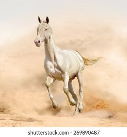 perlino horse isolated in sand background