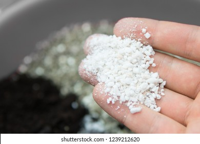 Perlite in the hands of a man. The concept of growing medical cannabis in the doore indoor. Substrate for marijuana. Close up. Soil growing cannabis. A mixture of earth, perlite and vermiculite.