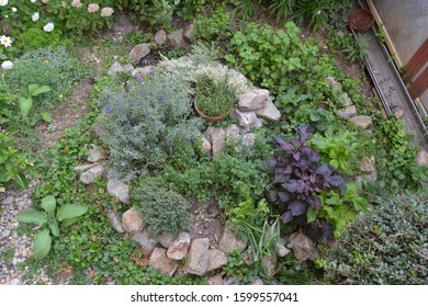 Permaculture element: Herb spiral in late summer/indian summer or early autumn