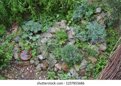 Permaculture element: Herb spiral in summer season during summer rain