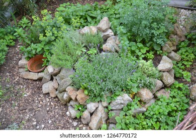 Permaculture element: Herb spiral in summer season