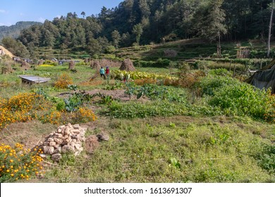permaculture farm in rural nepal
