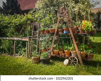 Permaculture Garden in the Summer