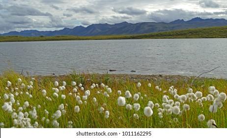 Permafrost lake in Tundra, Yukon, Canada