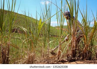 Ribeirão, Pernambuco, Brasil. Abril/2013.  Rural worker. Canavieiro. Man working on sugar cane culture.