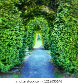 Perpective view of a tunnel of hedges and trees