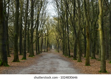 Perpective walking path in the forest with a line of trees