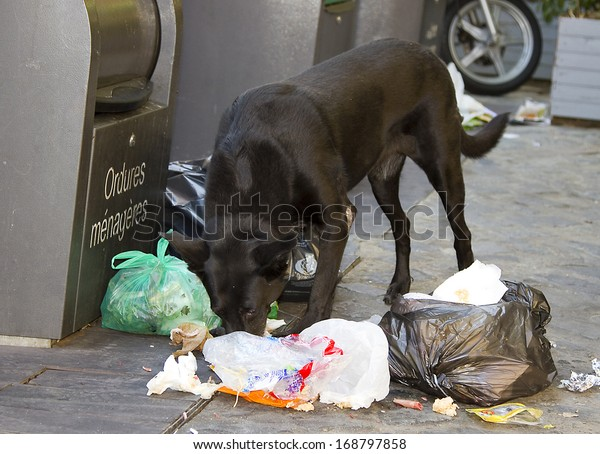 PERPIGNAN, FRANCE - AUGUST 29: Dog eating litter in the street during Visa pour l'Image, the premier International Festival of Photojournalism, on August 29, 2011, in Perpignan, France.