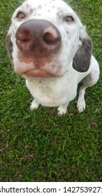 Perro blanco raza criolla jmgodoy