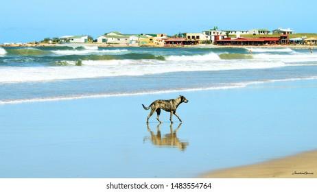 Perro paseando por la orilla del oceano